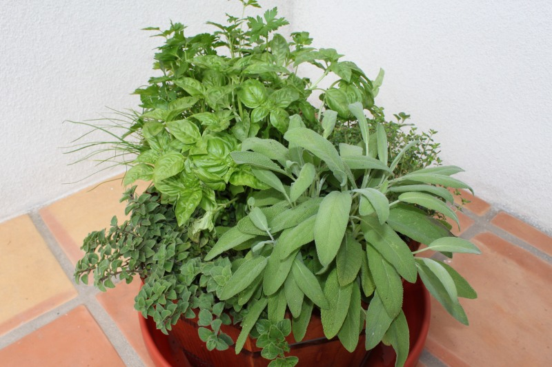 Fragrant, savory, aromatic herbs enhance flavors ocooked food without salt.